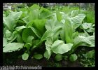 Asian Vegetable Small chinese Mustard Green ,Gai Choy seeds,Cải bẹ xanh -1-16 OZ
