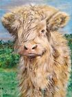 'Charlie' Highland Calf painting by Julia Pankhurst in print/canvas sizes