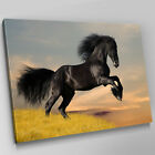 A527 Black Stallion Horse Rearing Canvas Wall Art Animal Picture Large Print