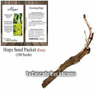 BEER HOP Rhizomes - Choose: Cascade, Centennial, Crystal, CTZ, Mt Hood - Z 3-8