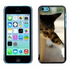 Hard Phone Case Cover Skin For Apple iPhone Sleeping cat sticks the