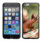 Hard Phone Case Cover Skin For Apple iPhone Beasts red squirrel on a