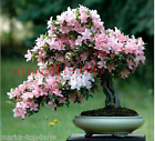 6 colors japanese sakura seeds 2015 new seeds Cherry Blossoms Seeds Japanese Che