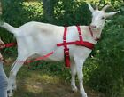 Goat Pulling Harness Heavy Duty Lined 9 colors Carter Pet Supply USA HAND MADE