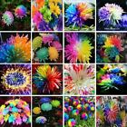 100pcs/bag rainbow daisy chrysanthemum bonsai flower seeds beautiful potted plan