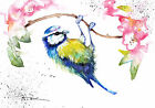 Print or Greeting Card Watercolour Blue Tit by Artist Be Coventry wildlife art