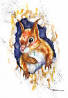 Print or Greeting Card Watercolour Red Squirrel by Artist Be Coventry art