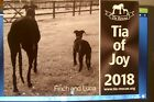 "TIA GREYHOUND RESCUE CALENDARS - ""TIA OF JOY 2018"" buy 1 for £6 or 2 for £10"