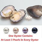 Akoya Oysters With Round Triplet Pearls Inside At Least 3 Pearls In Every 6-8mm