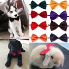 Elegant Pet For Small Dog Bowknot Necktie Dog Puppy Cat Bow Tie  OF UK