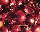 NON GMO Red Wethersfield Onion Bulb Sets For green onions and kitchen onions!