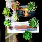 Garden Succulents: 3-Wick *Bath & Body Works* Candle Lid Magnet Toppers