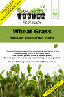 Wheat Grass Organic Sprouting Seeds
