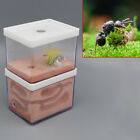 Ant Nest Farm Landscaping Housing For Ant Colony Science Nature Educational Tool