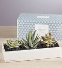 Thank You Succulents by Lula's Garden-Three Sizes Joyful Gift Present Easy Care