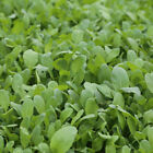 Colorful Retail package Garden Yard Chinese Vegetable Seeds 原装彩包春秋播蔬菜种子