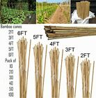 2ft-6ft Heavy Duty Bamboo Garden Canes Strong Thick Quality Plant Support Sticks