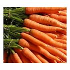 "Carrots ""Little Fingers"" Petite, Sweet & Crunchy little Carrots..FREE SHIPPING!!"