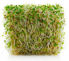 Alfalfa Sprouting Seeds - Nutritious & Delicious - Grow Your Own! Free Shipping