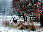 Winter Meal Deer Canvas Pictures Snowy Scenery All Sizes Wall Artwork Prints