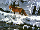 Fox Hunting In The Snow Canvas Pictures All Sizes Animal Winter Wall Art Prints