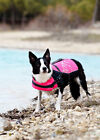 Dog Lifeguard Life Jacket, Large size range, Ideal for water activities | Hurtta