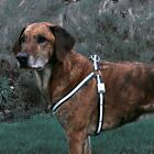 DOG FLASHING HARNESS 3 SIZE'S FLASHING LEAD 1.3M LONG SM/MED/LGE STRONG DELUXE