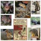 Squirrel Magnet or Chipmunk Magnet Pick Your Fave - Black Squirrel Grey Red