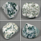 One High Quality Tree Agate Tumble Polished Crystal Stone, Size 1 to 1.2 Inch