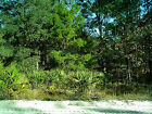 HUGE LOT LAND TAMPA, ORLANDO SOUTH FLORIDA AREA 18 MINUTES TO DISNEY WORLD
