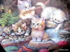 """Am Seerosenteich The Lily Pond Limited Edition 7.75"""" Plate 4 Wee Kittens Playing"""