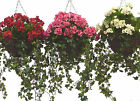 Artificial Geranium Hanging Basket ~ Various Colours ~ Very Realistic product!