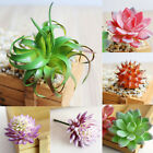 Artificial Plastic Juicy Green Agave Cactus Plant Aloe Stripes Fake Fleshy Cheap