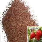 1 Bag 100 Seeds Red Strawberry Seeds Home Garden Fruit Plant Sweet And Delicious