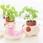 Mini Ceramic Plant Pots Cute Self Watering Animal Planter Drinking Animal Tongue
