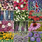 Garden Patio Best Hardy Perennial Plants in 1 litre Pots - Great Summer Display