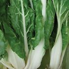 Virgo Swiss Chard Seeds - Helps regulate blood sugar!! Good For You!!