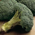 Packman Hybrid F1 Broccoli  Seeds - you can grow it all season!! MMmm..GOOD!!!!