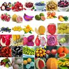 Wholesale Multi -Style Fruit Seeds Garden Yard Potted Plant Seed Bonsai Decor