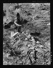 Mexican Grave,Raymondville,Texas,TX,Farm Security Administration,1939,FSA