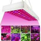 CASTNOO 1000W LED Grow Light Panel Hydroponic Plant Growing Full Spectrum BR