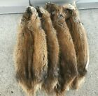 1 - Tanned Midwestern muskrat pelt, Imperfect grade prime (musMWImp)