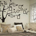 Family Tree Wall Stickers Birds Photo Frame Quotes Art Decals Home Decor New