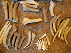 1.8 to 2 LB ELK Antler Dog Chews Jumbo XL Large Med OR Small - Hard Chewers