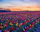 Colorful Tulips Field Art Poster Print New