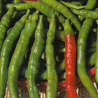 Sigaretta Dolce Sweet Pepper - Fresh, Fried, Grilled, Pickled or for Salad !!!!!