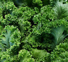 Southern Giant Curled Mustard Greens--Sharp and TASTY!!!! mmmmmm.....