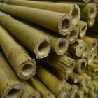 6ft Yuzet Heavy Duty garden Canes Bamboo cane strong plant support trellis