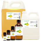 Ylang Ylang Fragrance Oil (Free Shipping)
