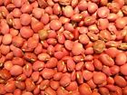 Red Ripper Cowpeas -  A good flavored table pea with 12 - 14 in. pods!!! Mmmm..